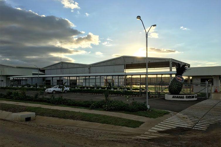 Ananas Export Company